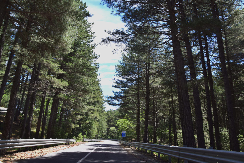 A roud in the mountain surrounded by trees